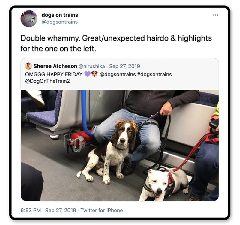 Dogs on a train