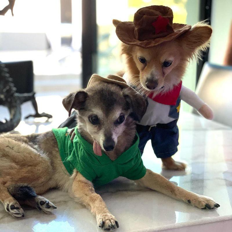 Dogs in cowboy and Peter Pan costumes