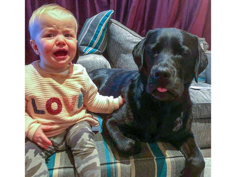 dog sibling