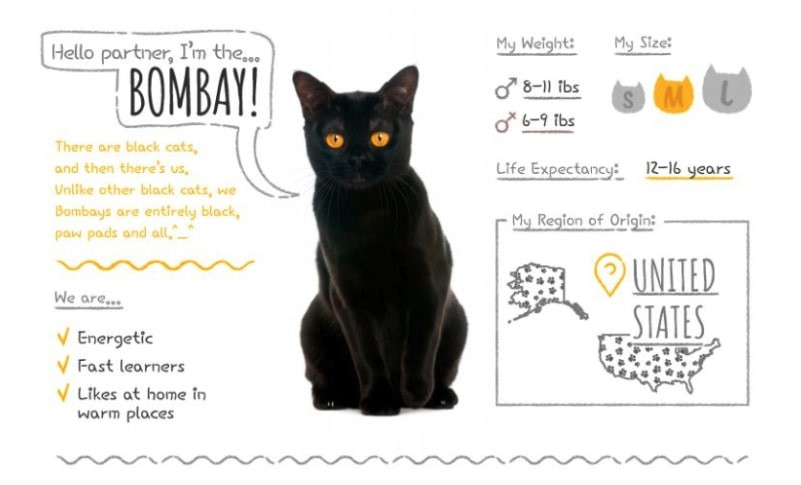 Bombay Summary