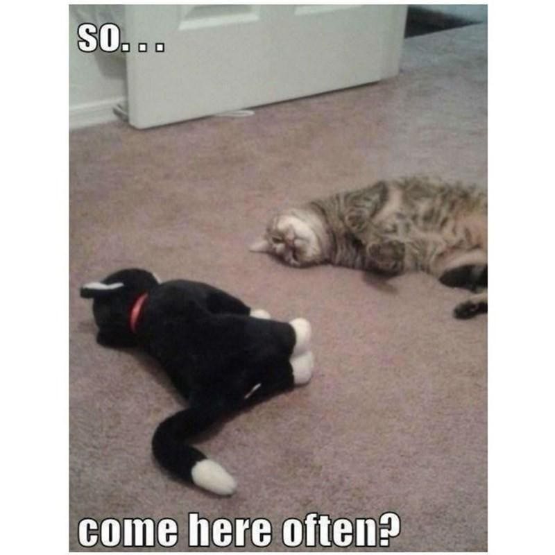 Cats interacting on the floor
