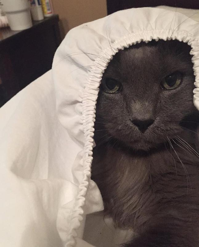 Cat under bedsheet