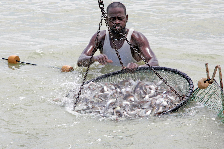 Catfish in Mississippi