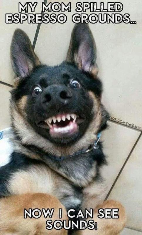 Toothy dog
