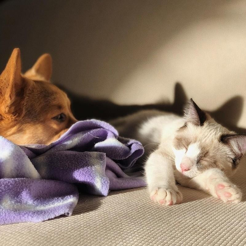 Another sleeping cat and dog