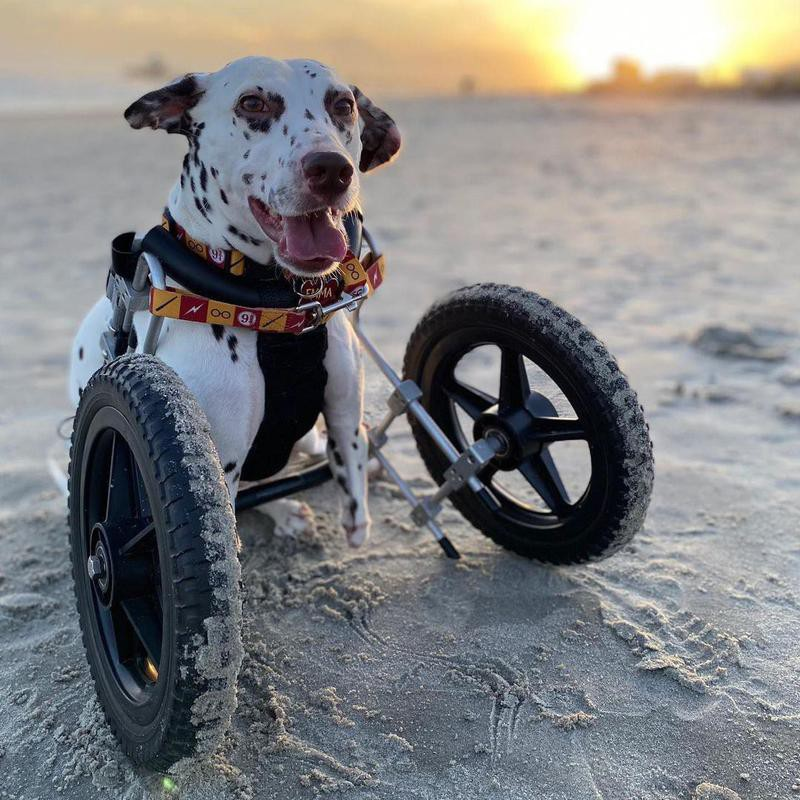 two-legged dog on beach