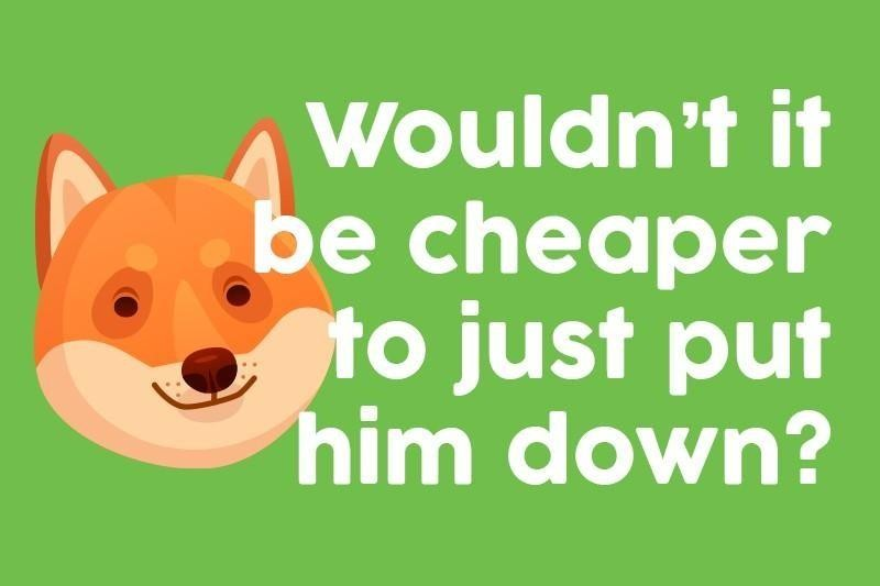 Wouldn't it be cheaper to just put him down?