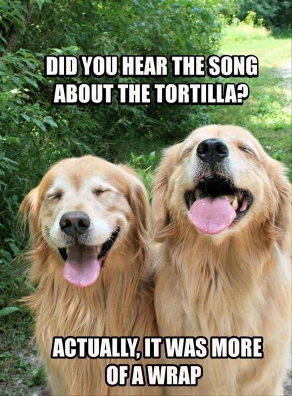 Dogs cracking each other up with puns