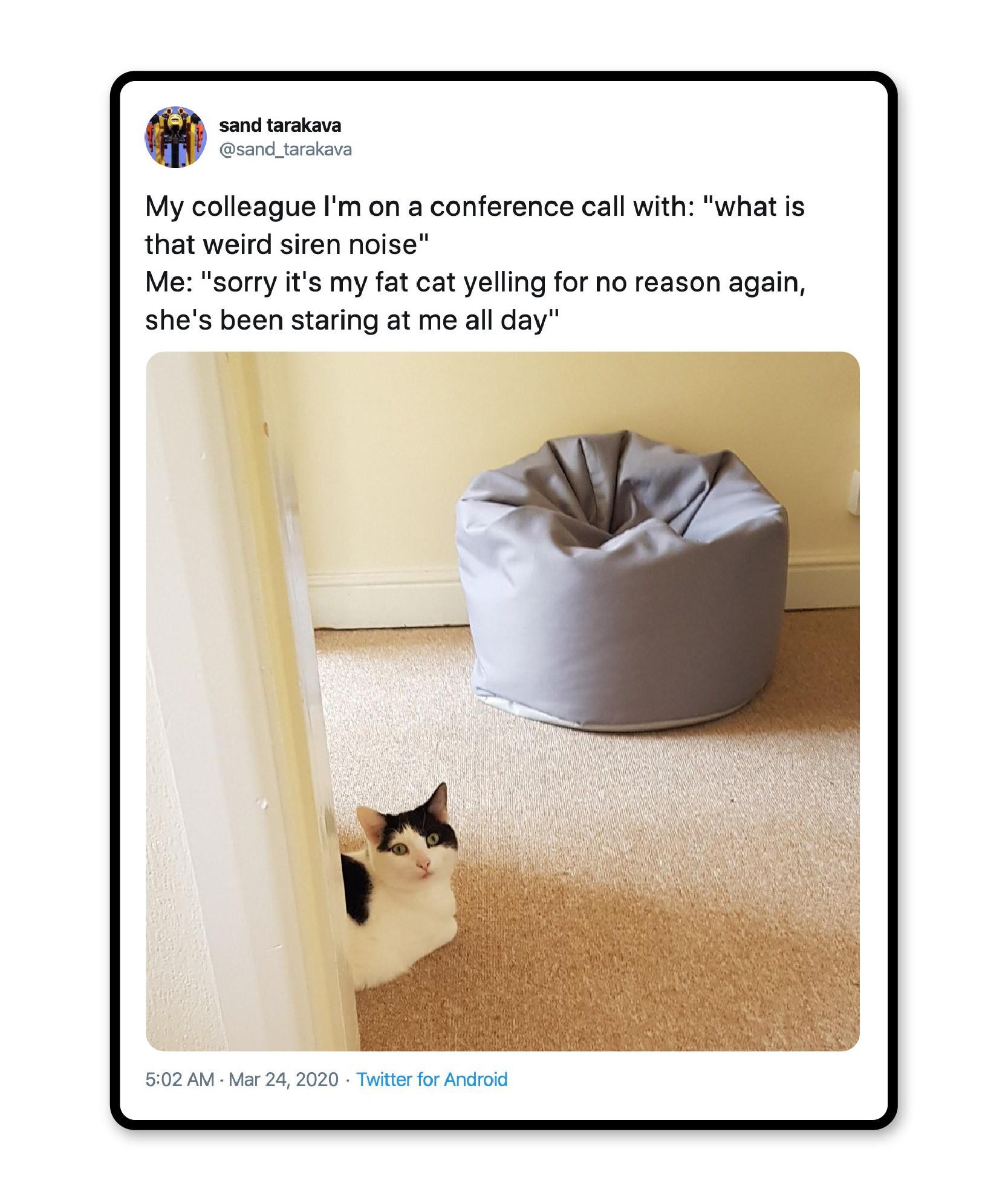 Fat cat noise