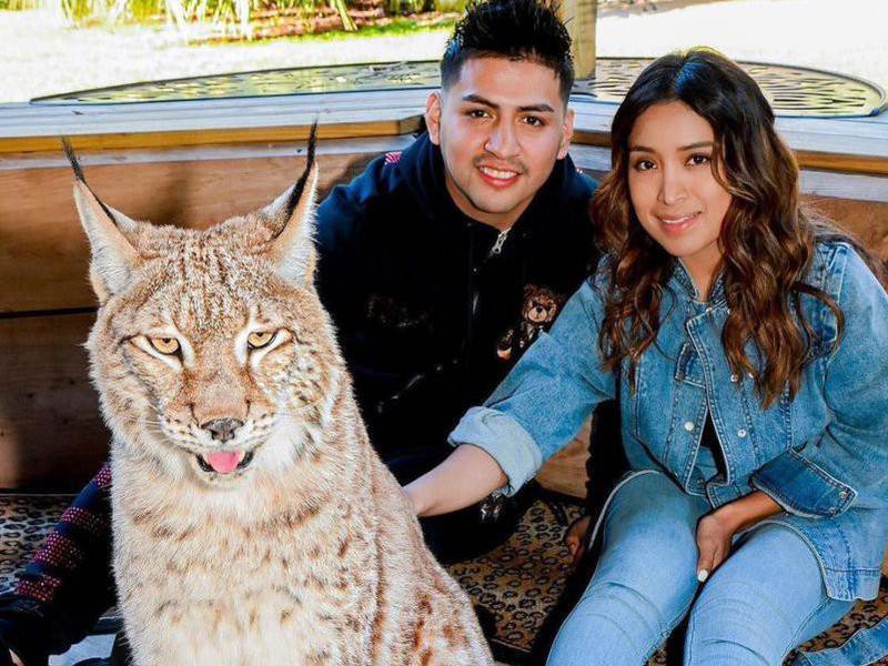 Visitors petting lynx