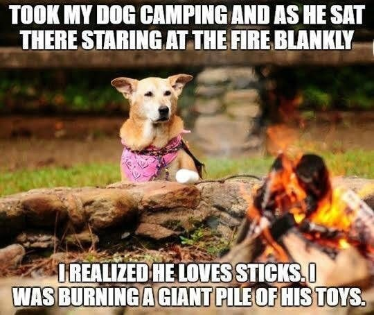 Camping with dogs meme
