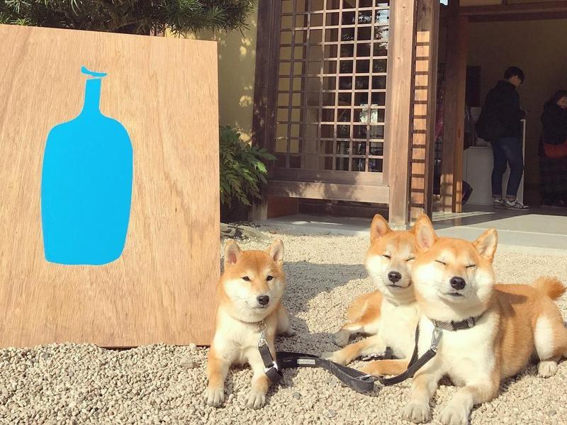 Dogs in coffee shop in Japas
