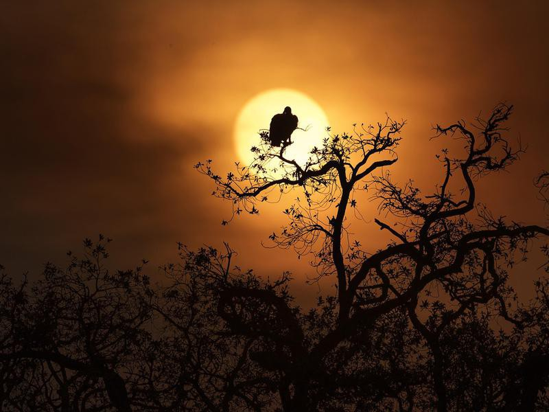 Bird Perched for a View of the Sunset