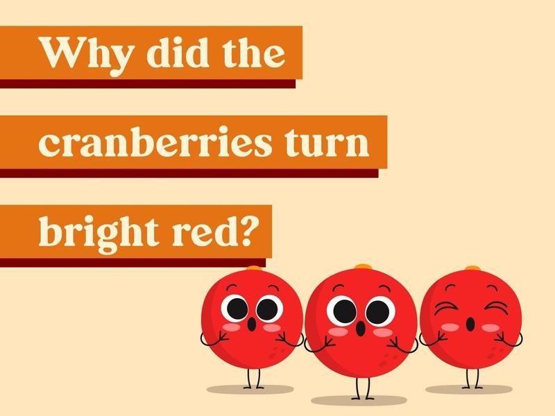 Why did the cranberries turn bright red?