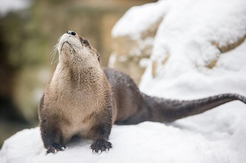 Minnesota Zoo, Apple Valley, Minnesota