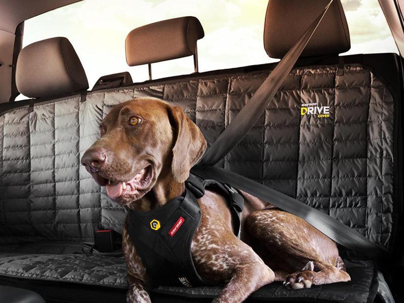 Dog with crash tested car harness