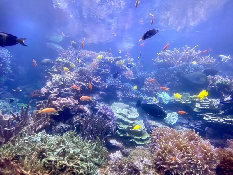 Long Island Aquarium reef