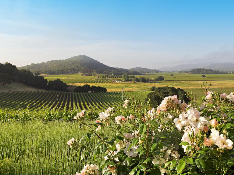 Napa Valley landscape in spring