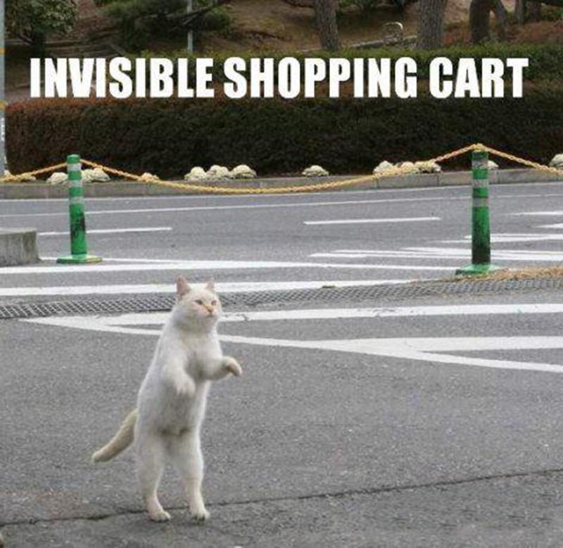 Cat pushing invisible shopping cart