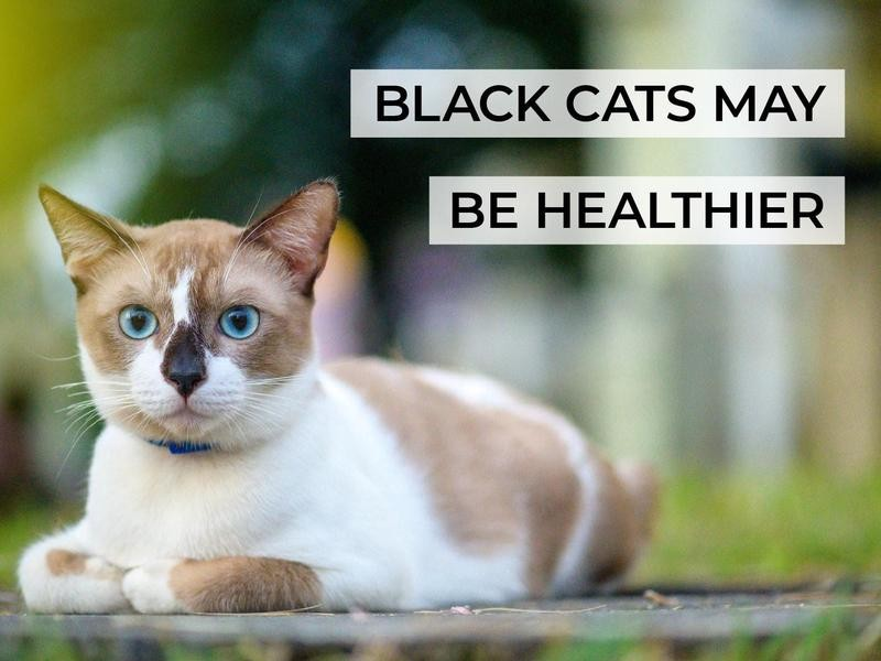 Black Cats May Be Healthier