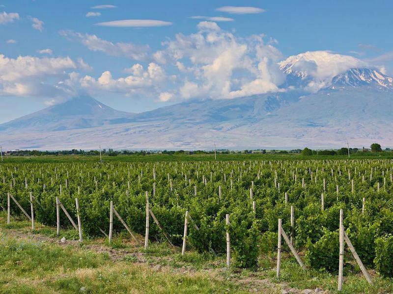 Vineyards and Mount Ararat, Armenia