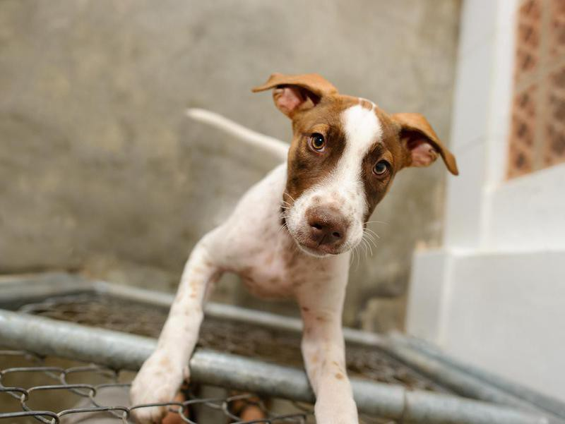 All Rescue Dogs Are Damaged — Debunked