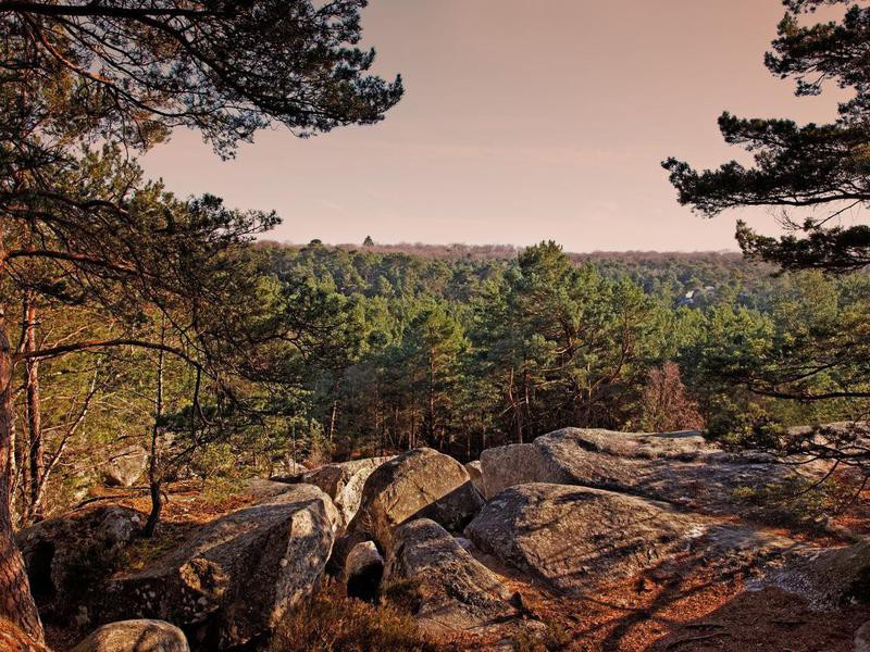 Fontainebleau forest in France