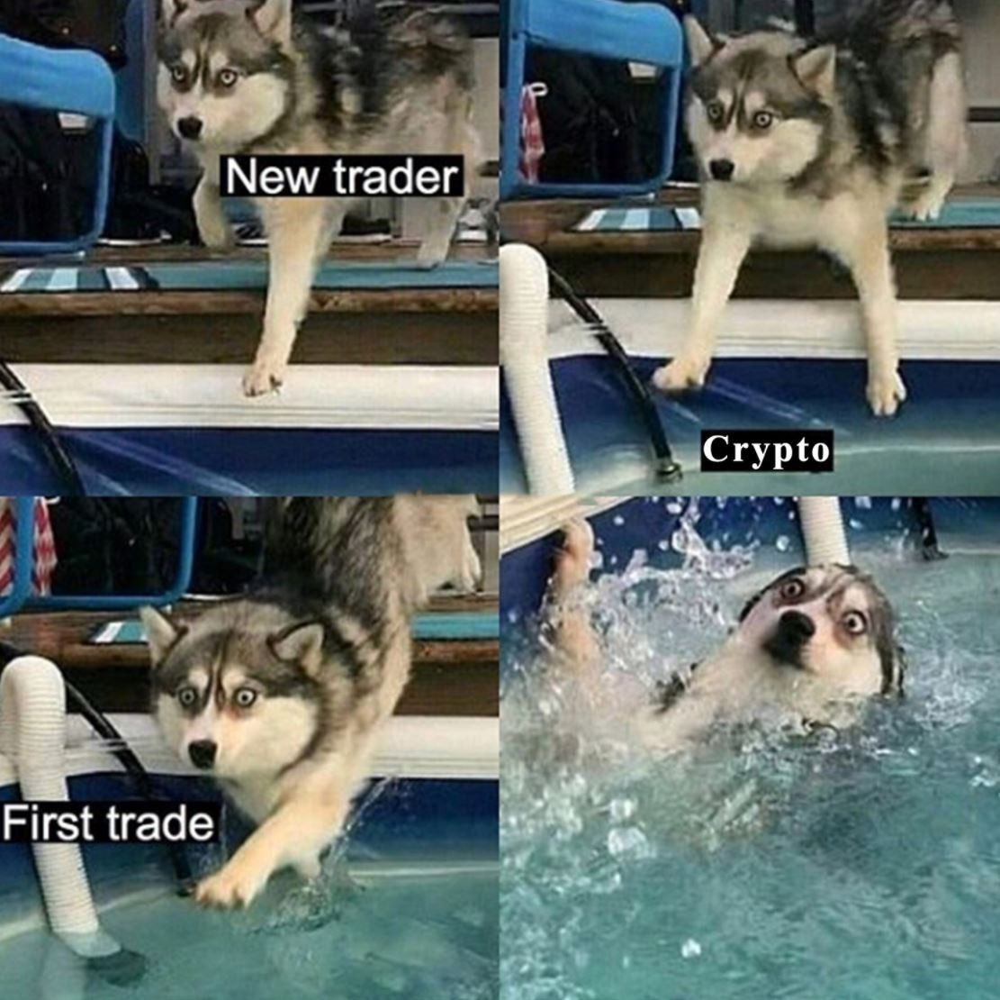 Learning how to swim in the crypto pool