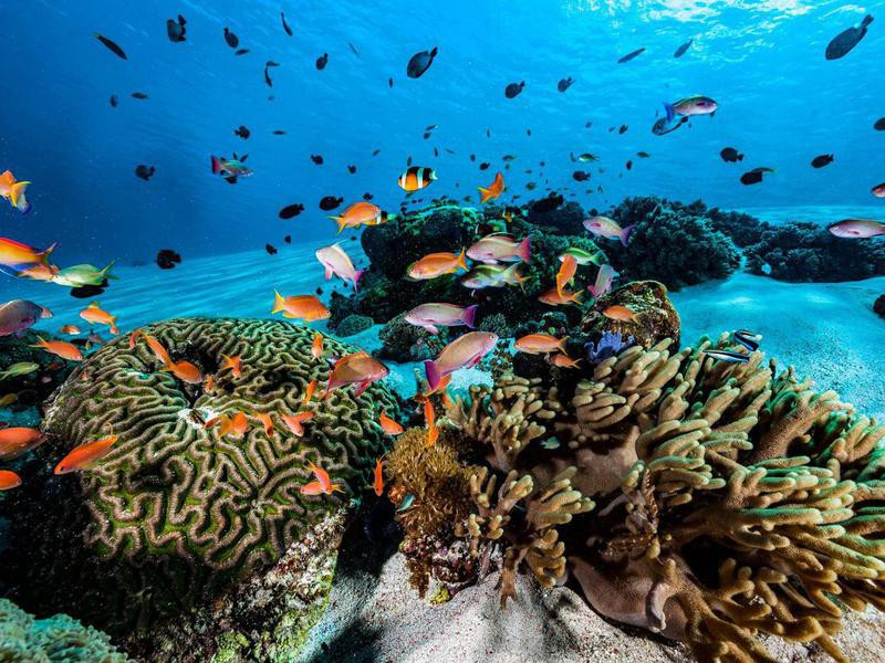 Sandy Reef, Komodo National Park