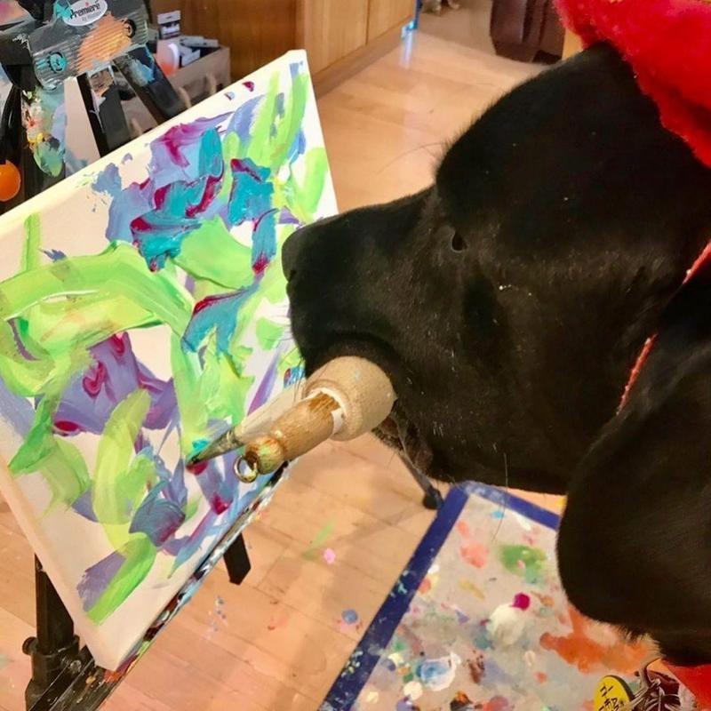 Dog Vinci