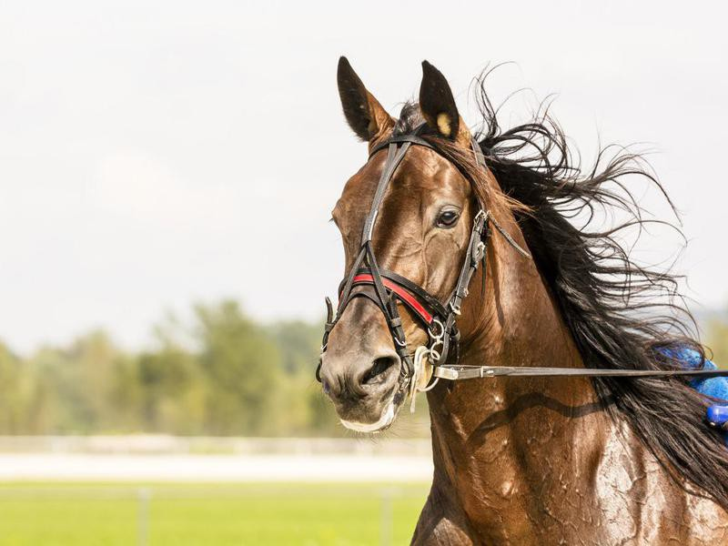 Close-up of horse on harness