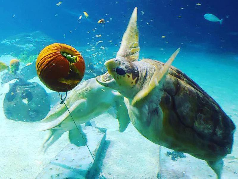 Adventure Aquarium Sea Turtles