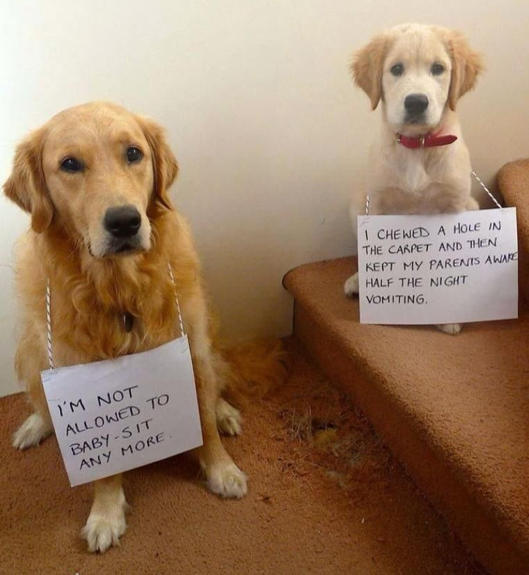 Two dogs got in trouble