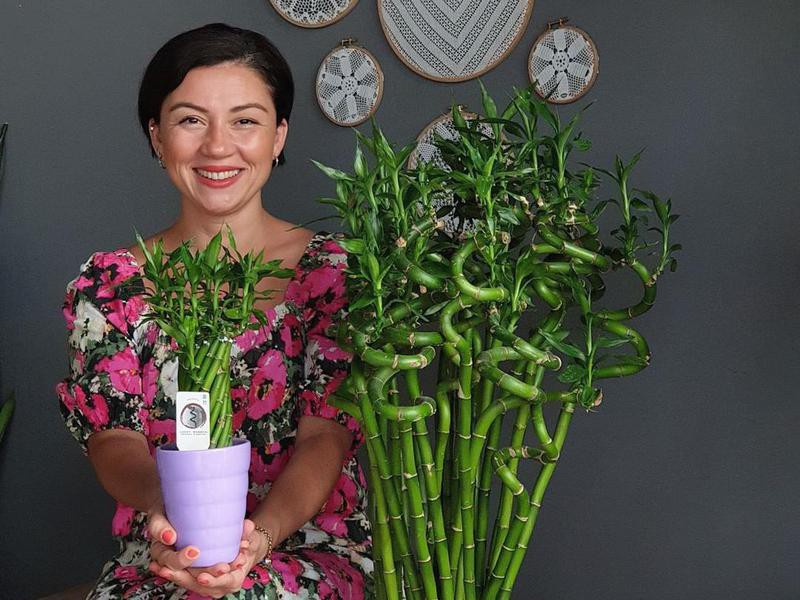 Woman holding potted lucky bamboo plant