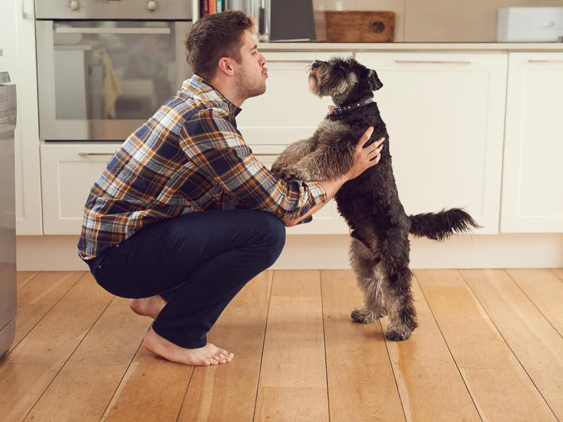 Surefire Dog-Training Tips and Techniques