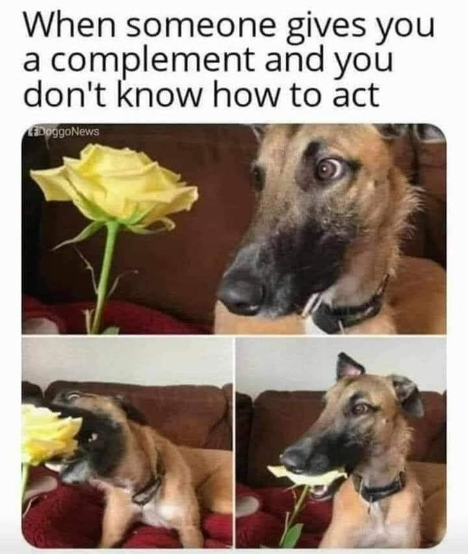 Dog eats a rose