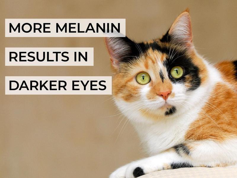 More Melanin Results in Darker Eyes