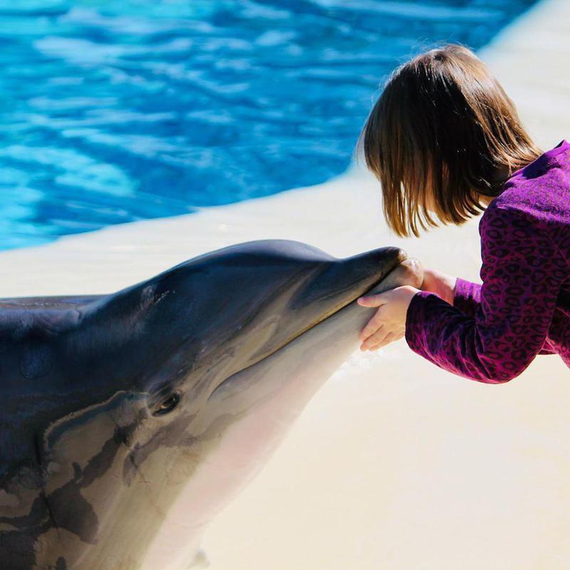 Secret Garden & Dolphin Habitat