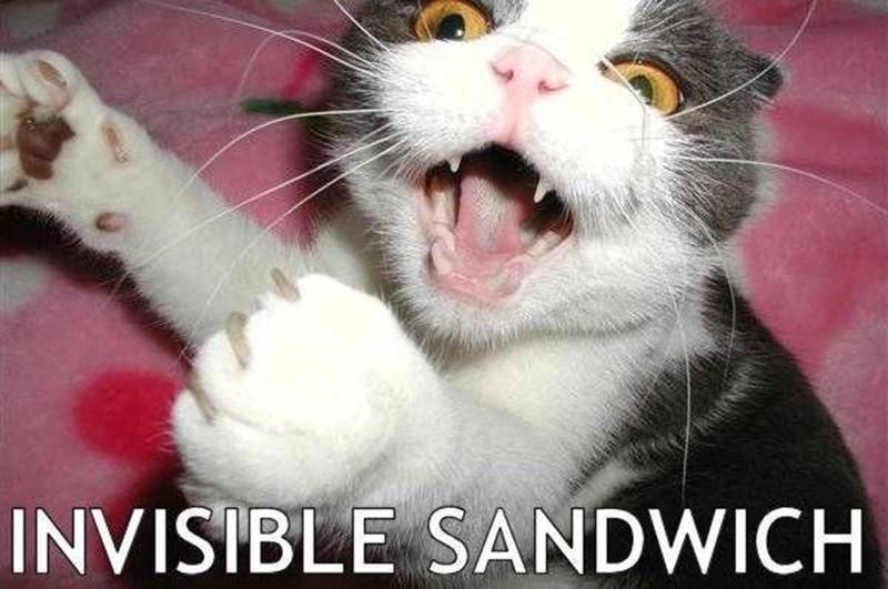 Cat wants a sandwich