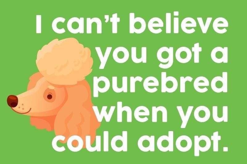 I can't believe you got a purebred when you could adopt.