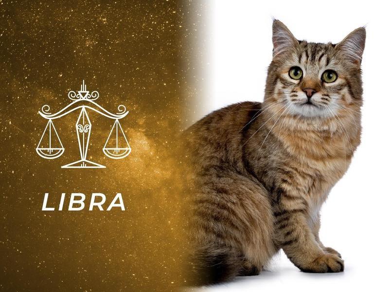 Libra: Pixiebob