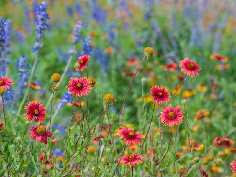 Grow a Wildflower Garden