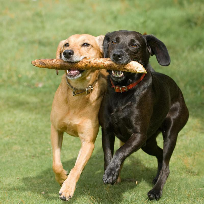 Playing fetch together