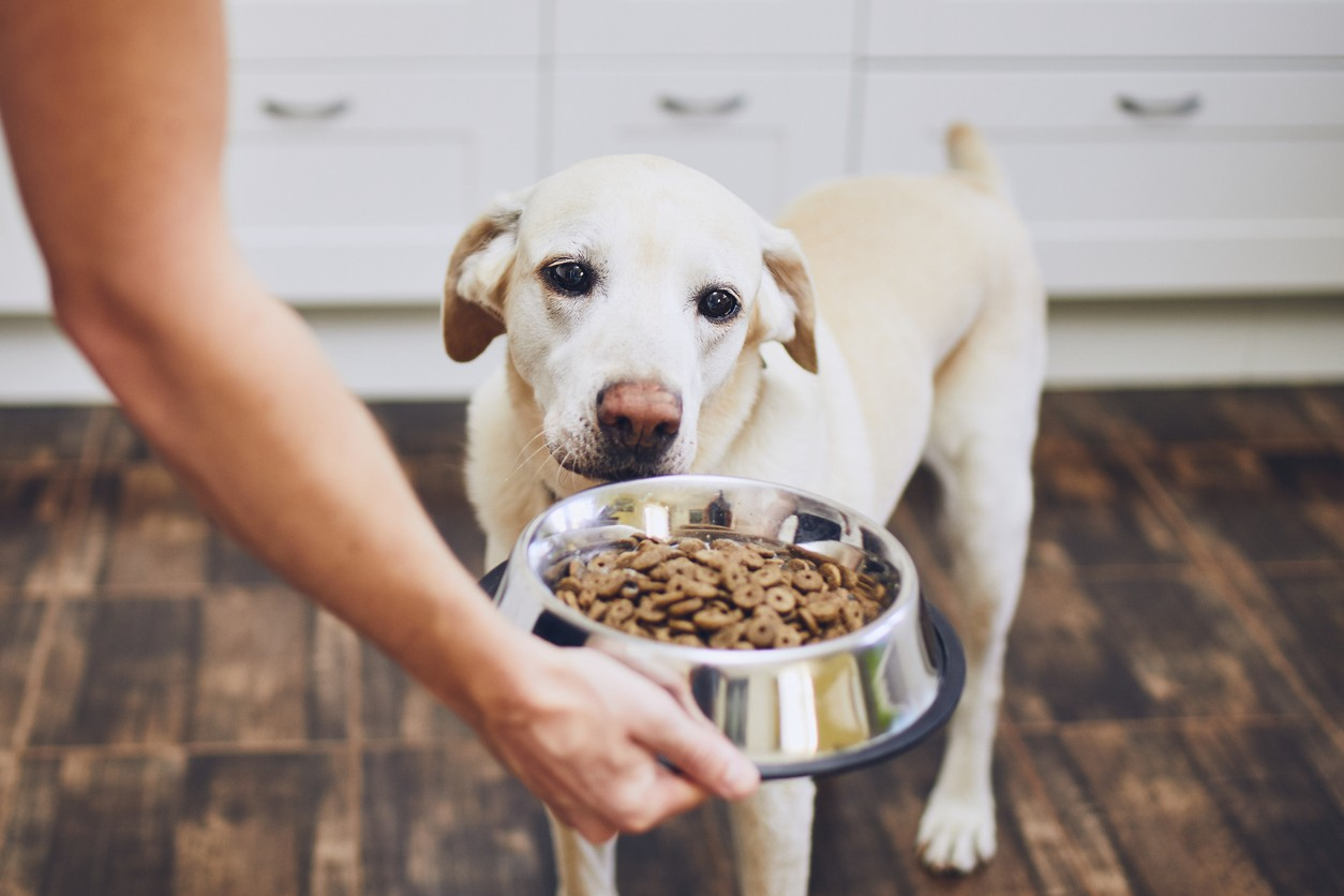 Don't Wait to Feed Your Dog