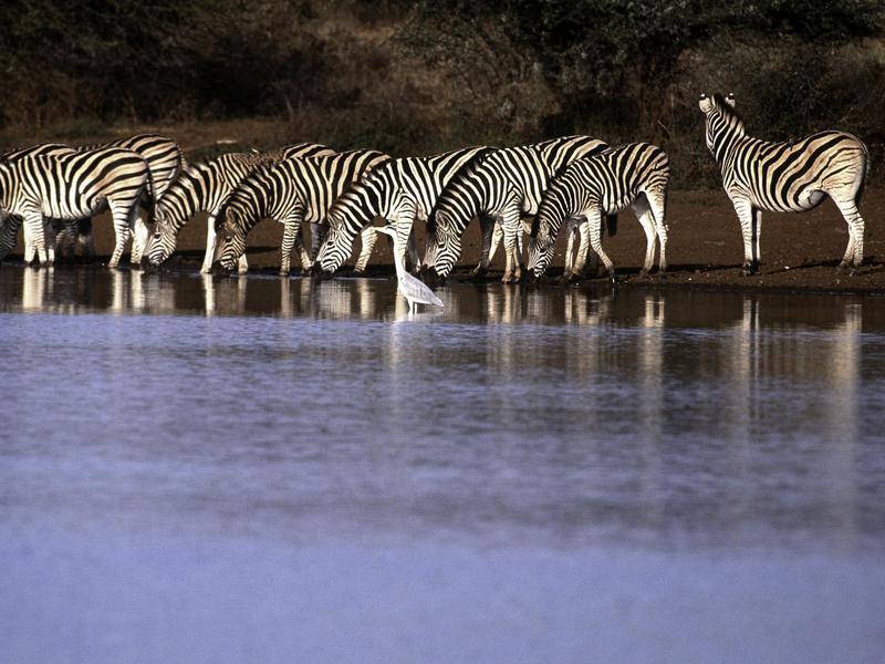 Kruger Watering Hole