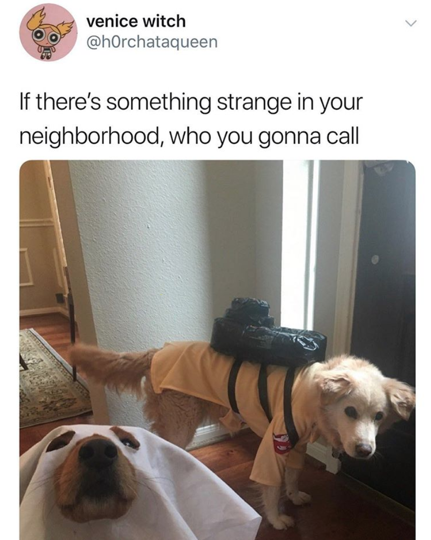 Ghostbusters dog