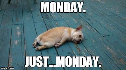 Dog doesn't like Mondays