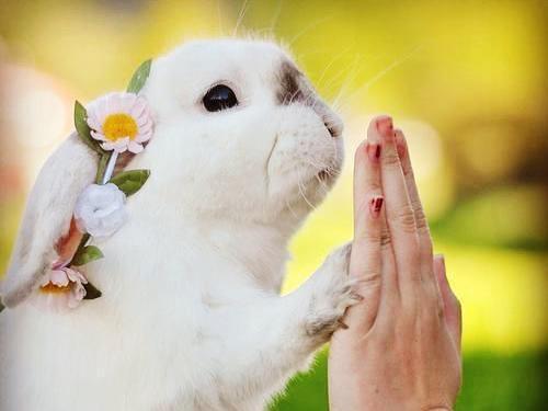 bunny rabbit tricks