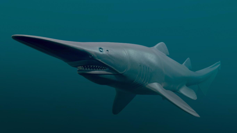 3-D rendering of a goblin shark