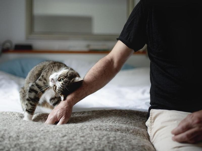 Kitty Instigated Petting